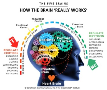 HOW-THE-5-BRAINS-WORK